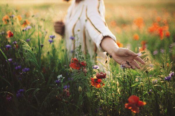 Moringa-Blossom-Teaser